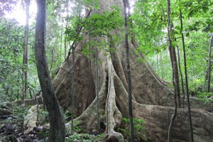 Hanoi Day Tour Cuc Phuong National Park