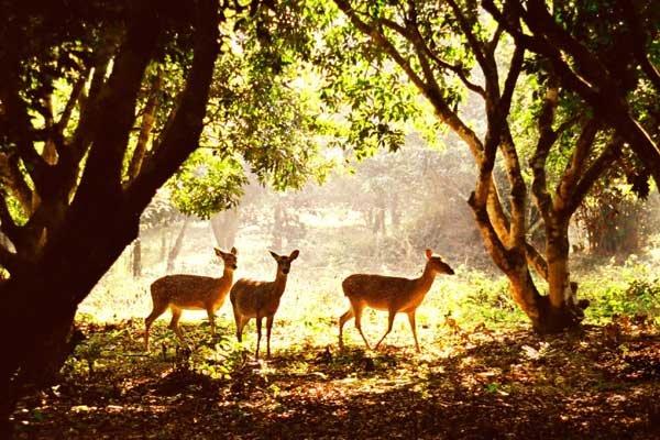 Cuc Phuong National Park (10)