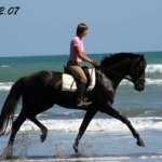 """""""Breeding News for Sport Horses"""": Thinking in Generations"""