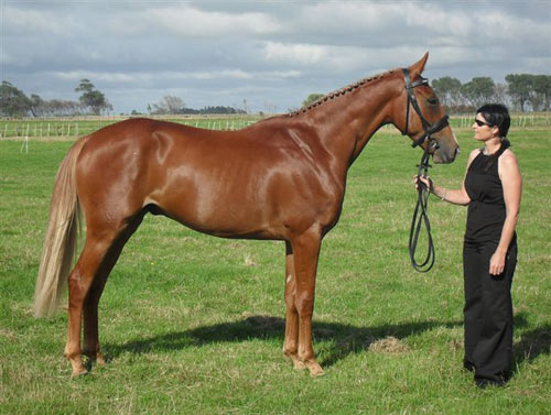Latimer with his proud owner Rochelle Speirs in February 2010