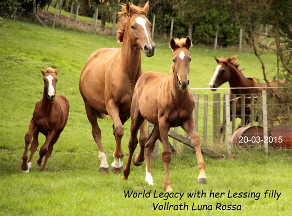 World Legacy with her 2014 Lessing foal Luna Rossa.