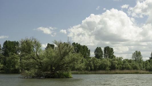 Biesbosch 2014-17