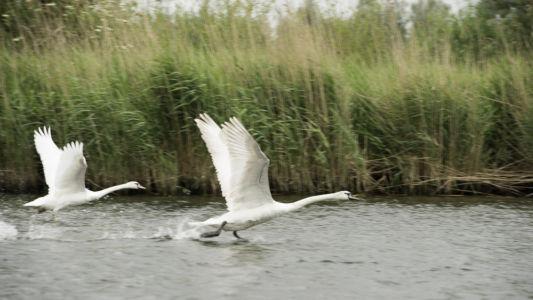 Biesbosch 2014-4