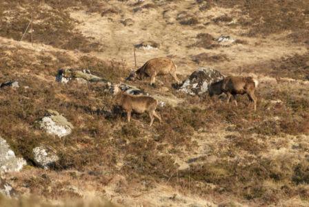 Corrour Scotland 2007-5