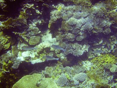 Egypte 2007 Snorkelen-11
