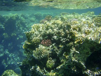 Egypte 2007 Snorkelen-23