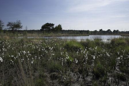 Kalmthoutse Heide 2014-10