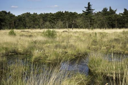 Kalmthoutse Heide 2014-6