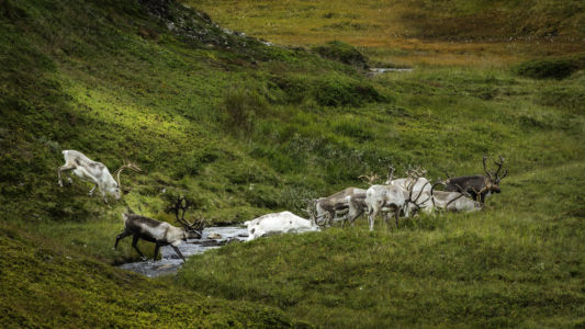 Noorwegen41