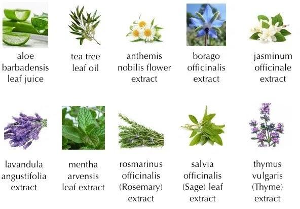 10 ekstrak tumbuhan semulajadi