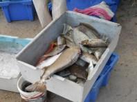 Fischereigenossenschaft