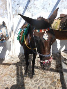 they donkeys were so dressed up :P