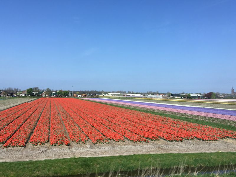 Distracted by the tulips seen from the train, I totally forgot my backpack