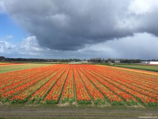 Tulip season is a beautiful time to explore the area south of Amsterdam and north of Leiden