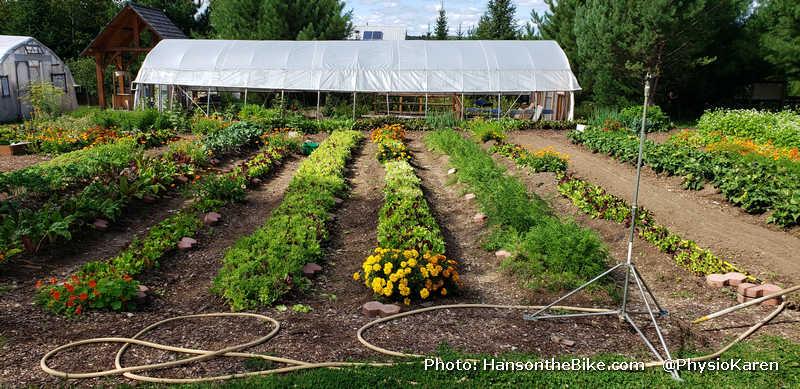 Organic veggies at Abbey Gardens