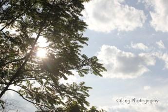 matahari mengintip dibalik dedaunan