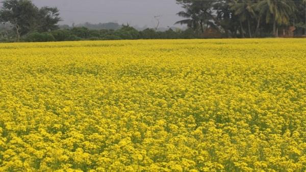 Lakshmipur-Sorisha-Pic-1