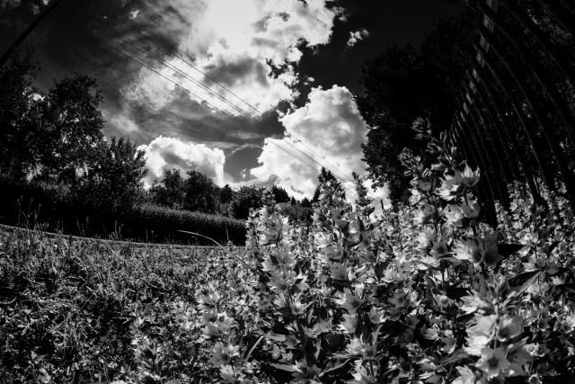 Spannende Schwarzweiß-Bilder mit Polfiltern