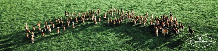 pasture-raised-venison