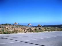 Camels hiking towards Al-Shaat
