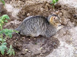 This garden is my sandbox!
