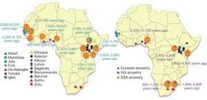 The African Genome Variation Project shapes medical genetics in Africa