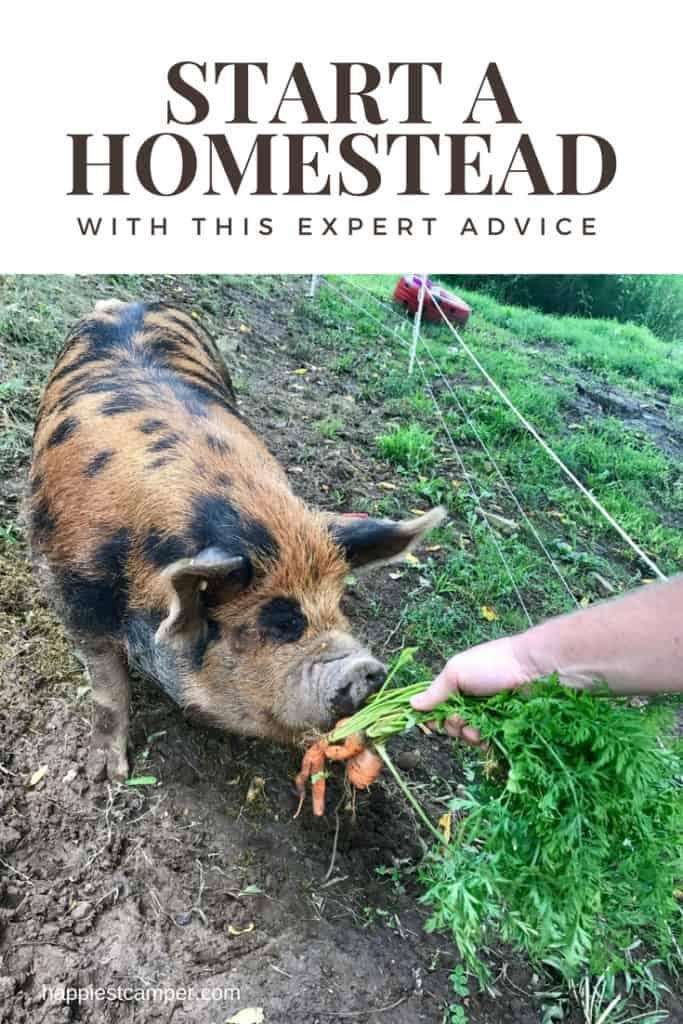 Advice for a New Homesteader Beginner