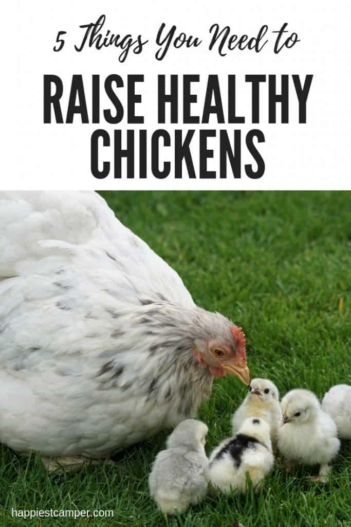 Raise Healthy Chickens