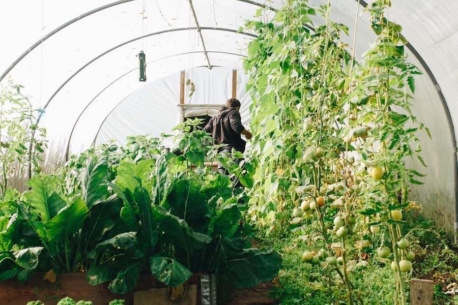 Double crop gardening