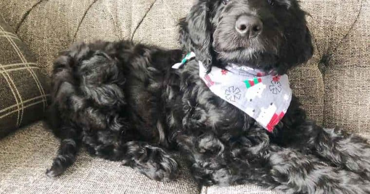 How to Sew a Dog Bandana