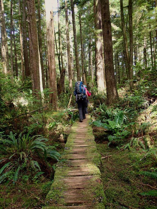 Boardwalk on the Walk the Wildside Trail