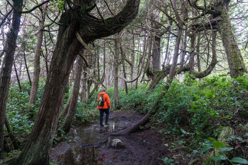 Hiking the coastal trail to Botany Bay in Juan de Fuca Provincial Park. Just one of many hikes on the Pacific Marine Circle Route on Vancouver Island.