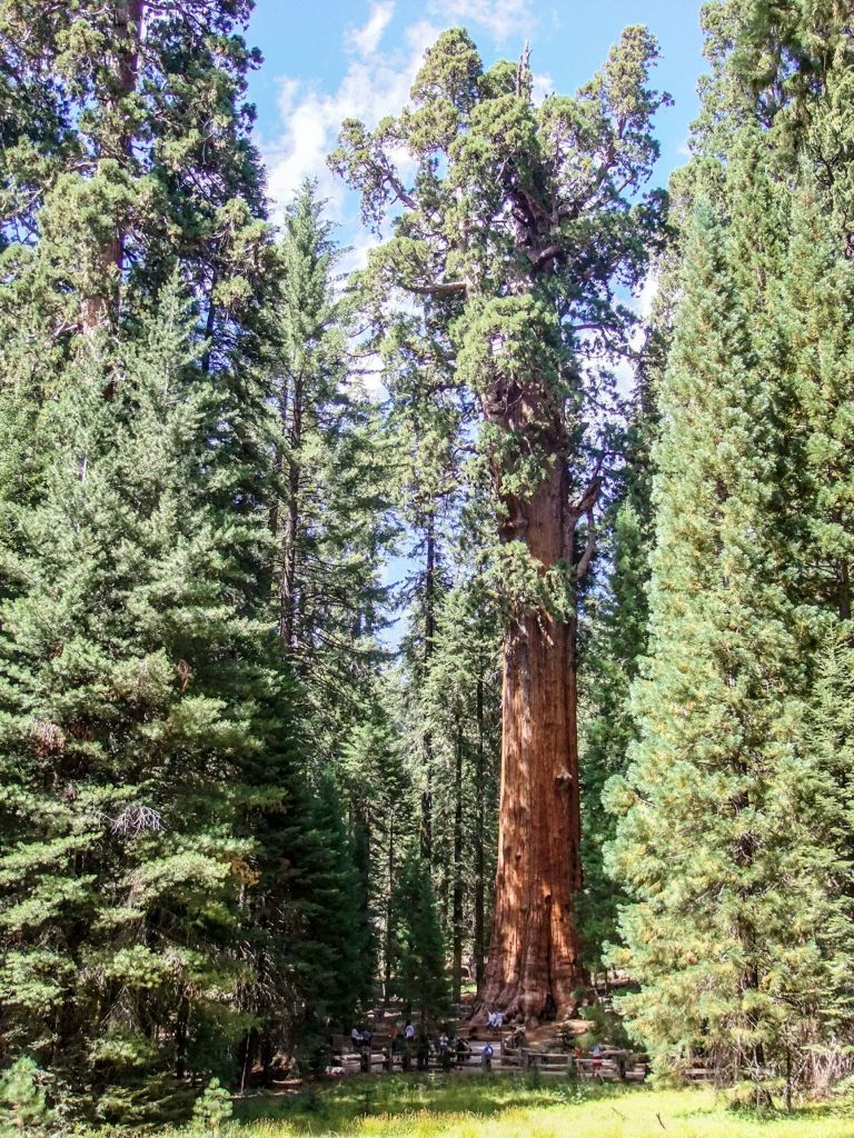 The General Sherman Tree in Sequoia National Park - just one of many things to do in Sequoia and Kings Canyon National Parks.