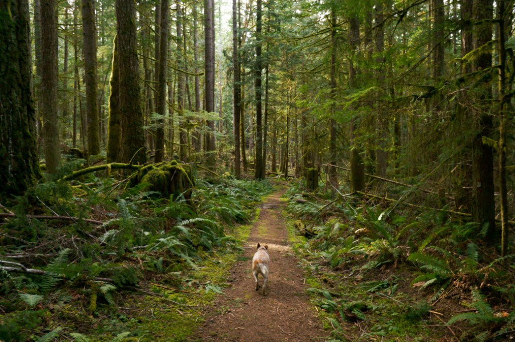 Frank the dog hiking BC's Sunshine Coast Trail. Learn how to Leave No Trace with dogs to help keep the wilderness wild.
