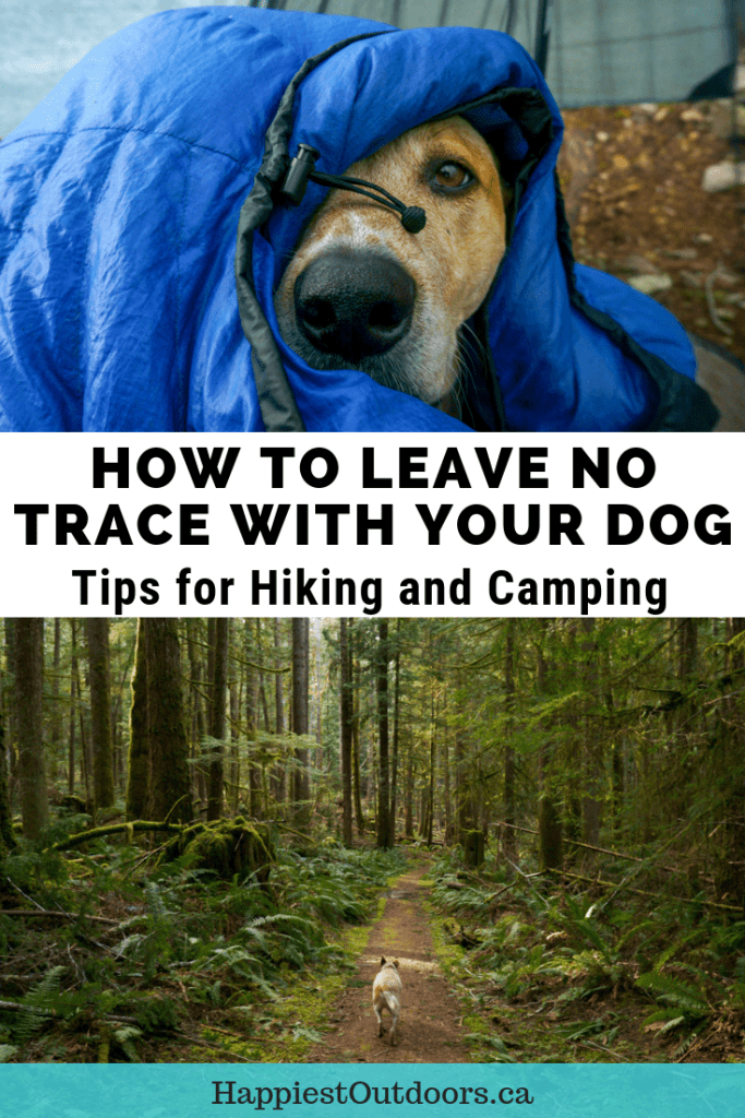 Learn how to Leave No Trace with Dogs while camping and hiking. A PCT thru-hiker teaches you how to apply the 7 principles of Leave No Trace to hiking and camping with your dog. And she should know - she hiked the entire Pacific Crest Trail with her dog. Includes info on trail etiquette, wildlife, dog poop and more. #LeaveNoTrace #hikingwithdogs #trailetiquette