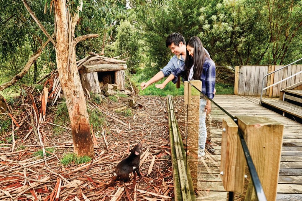 The Tasmanian Devil Unzoo near Port Arthur in Tasmania, Australia