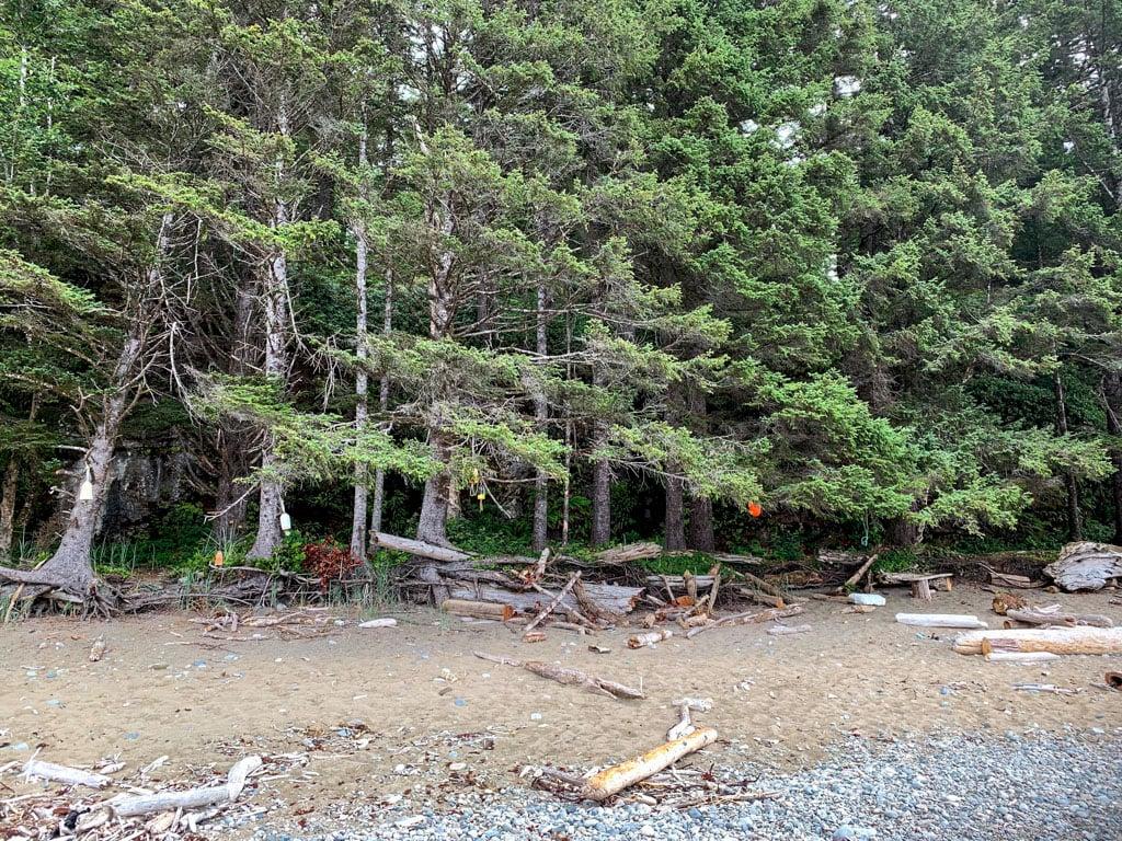 The Orange Juice Creek campground on the West Coast Trail.