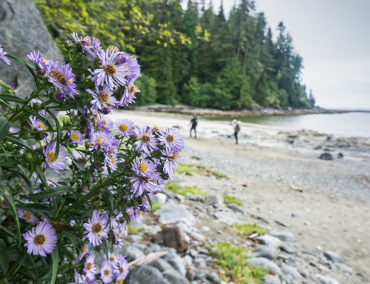 Flowers at the Pachena Bay trailhead of the West Coast Trail. Get your West Coast trail itinerary options in this post.