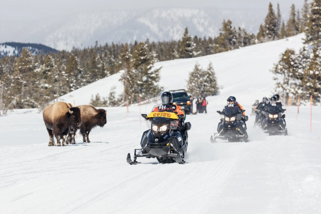 Snowmobiles pass bison in Yellowstone National Park