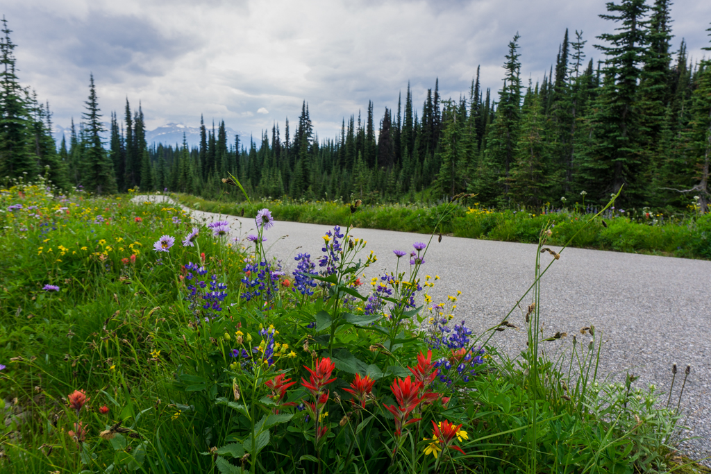 Wildflowers along the Meadows in the Sky Parkway in Mount Revelstoke National Park