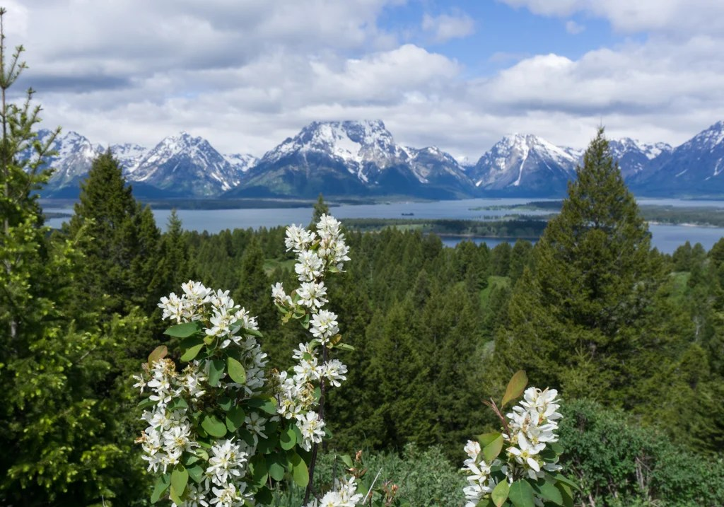 The view from the top of Signal Mountain in Grand Teton National Park