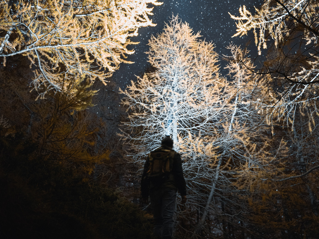 A hike illuminates the forest with a flashlight