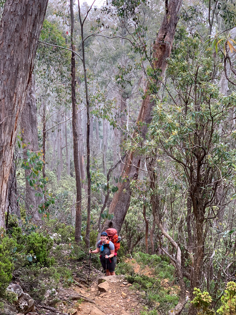 A hiker wearing a backpack stands on the steep trail leading up to Trappers Hut in Walls of Jerusalem National Park, Tasmania, Australia