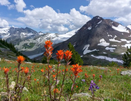 Wildflowers near Russet Lake in Whistler