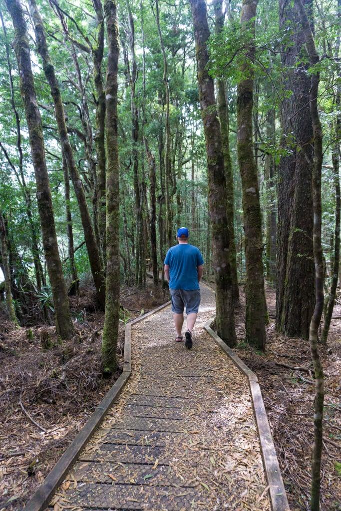 Huon Pine Walk in Corinna, Tasmania