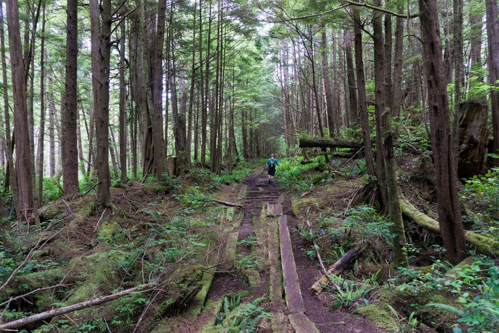 A section of WWII-era plank road near Cape Scott, British Columbia