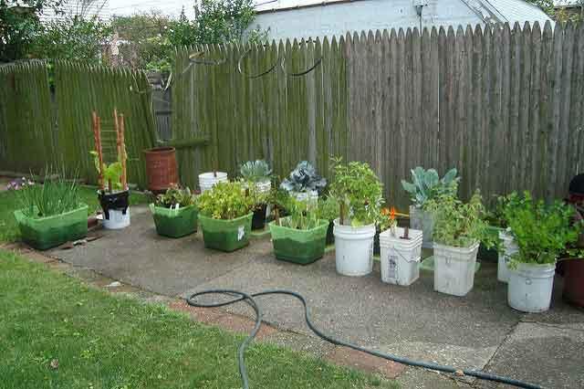 vegetable-garden-growing