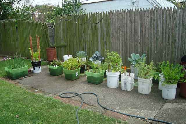 vegetable-garden-growing
