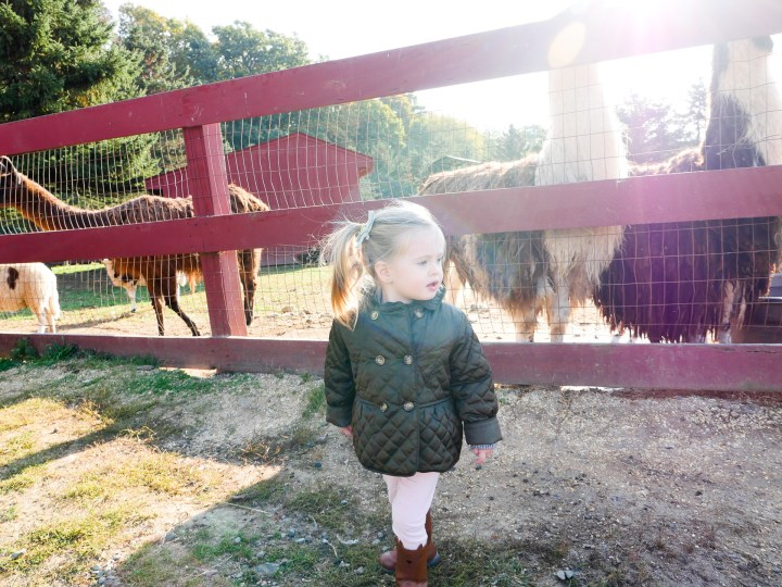 Marlowe Martino, wearing a hunter green peplum peacoat at the petting zoo in connecticut