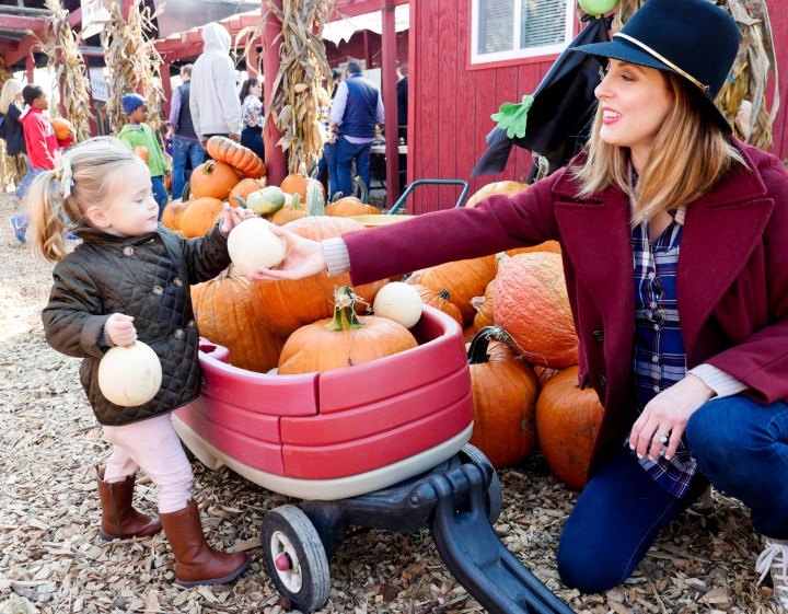Eva Amurri Martino from lifestyle and motherhood blog Happily Eva After, collecting pumpkins with two year old daughter Marlowe at Silverman's pumpkin patch in Connecticut